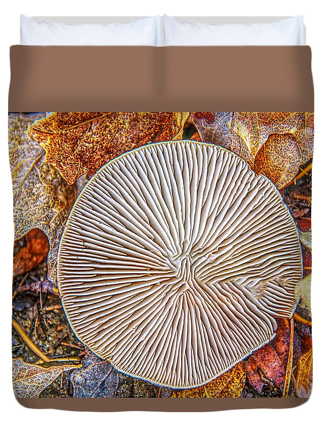 Mushroom Duvet Cover featuring the photograph Mushroom On Fall Floor by LeeAnn McLaneGoetz McLaneGoetzStudioLLCcom