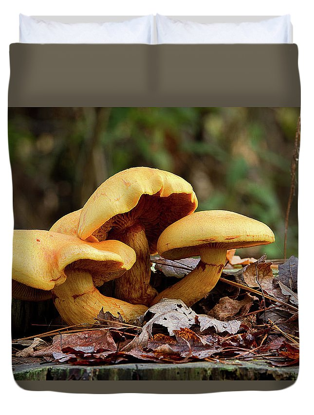 Mushrooms Duvet Cover featuring the photograph Mushroom Trio by MotionOne Studios