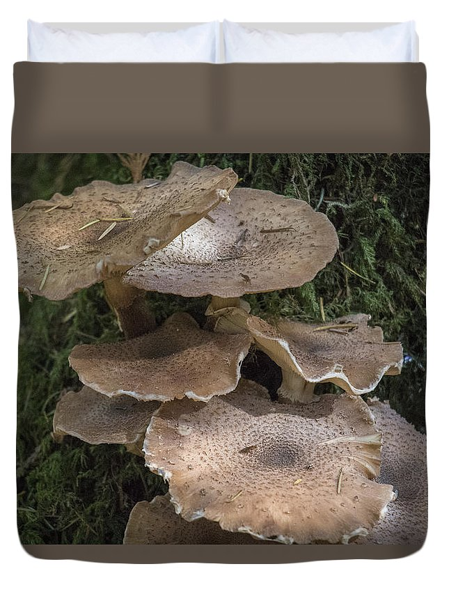 Mushrooms Duvet Cover featuring the photograph Mushrooms In The Forest by Wendy Nordvik-Carr