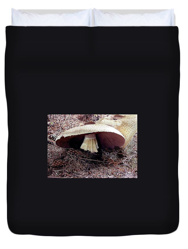 Mushroom Duvet Cover featuring the photograph Mushrooms Under Firs by Shirley Heyn