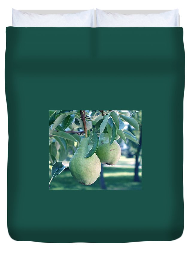 Pears Duvet Cover featuring the painting My Brothers Pear Tree by Wayne Potrafka
