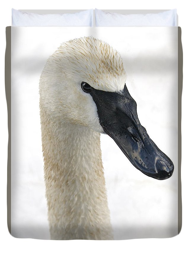 Trumpeter Swan Duvet Cover featuring the photograph My Close-up by Richard Rivard