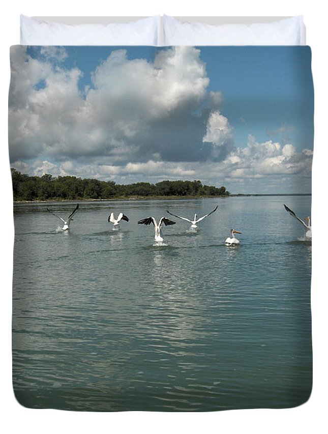 Pelicans Lake Water Trees Shore Beach Clouds Birds Water Foul Duvet Cover featuring the photograph My Pelicans by Andrea Lawrence