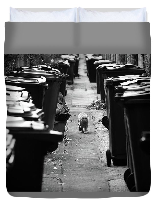 Duvet Cover featuring the photograph My Prowl by Jez C Self