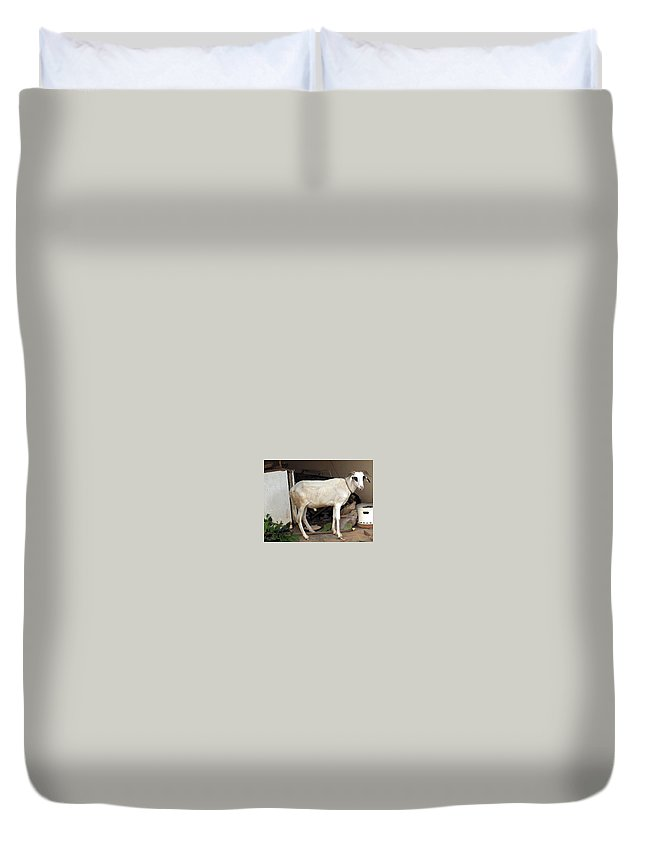 Ram Duvet Cover featuring the photograph My Ram by Amy Hosp