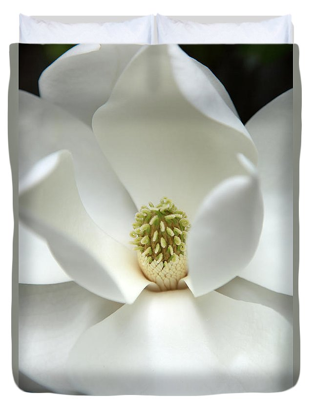 Magnolia Duvet Cover featuring the photograph Mysteriously by Amanda Barcon