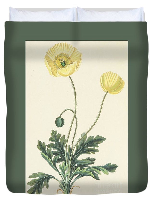 Poppy Duvet Cover featuring the drawing Naked Stalked Poppy by Margaret Roscoe