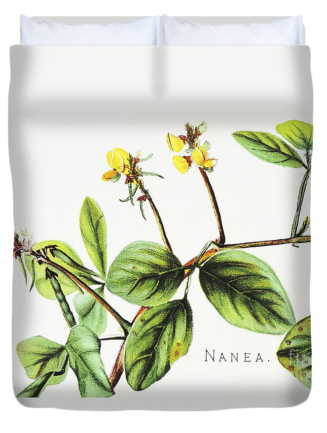 1885 Duvet Cover featuring the painting Nanea Flower Art by Hawaiian Legacy Archive - Printscapes