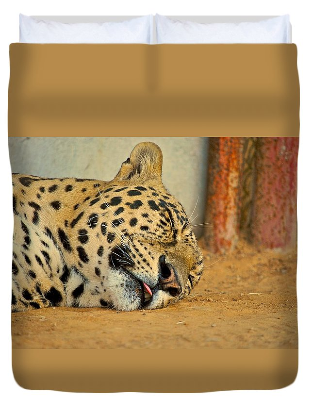 Leopards Duvet Cover featuring the photograph Nap Time by Donna Shahan