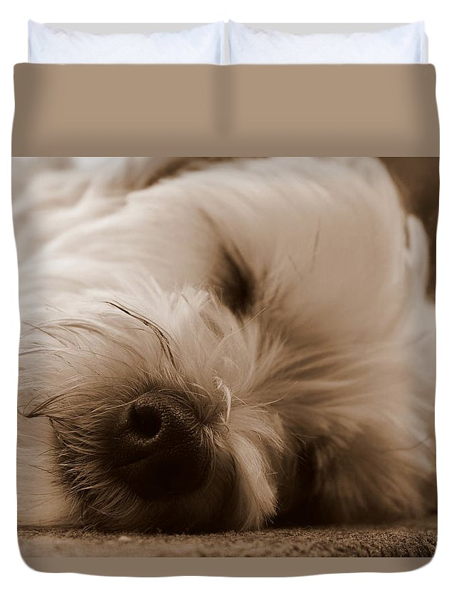 Nap Time Duvet Cover featuring the photograph Nap Time by Ed Smith