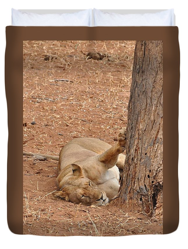 Lion Duvet Cover featuring the photograph Napping by Rachel Young