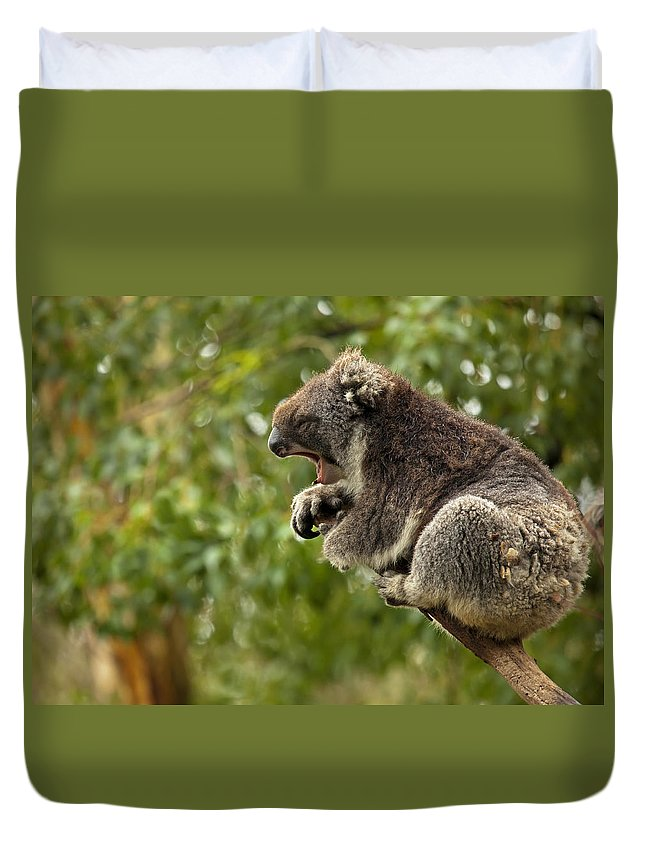 Koala Duvet Cover featuring the photograph Naptime by Mike Dawson