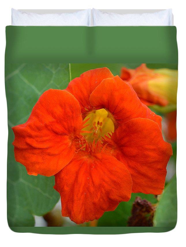 Flower Duvet Cover featuring the photograph Nasturtium by MHmarkhanlon