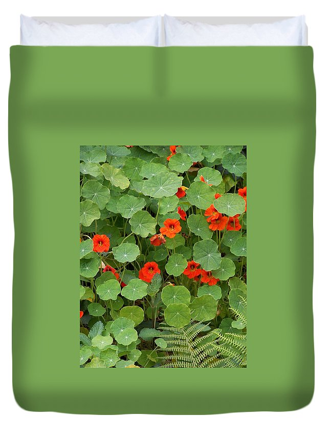 Nasturtiums Duvet Cover featuring the photograph Nasturtiums by Gale Cochran-Smith