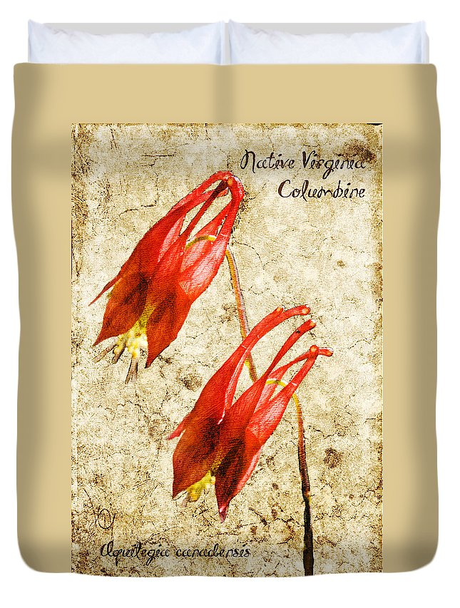 Columbine Duvet Cover featuring the digital art Native Virginia Columbine by Teresa Mucha
