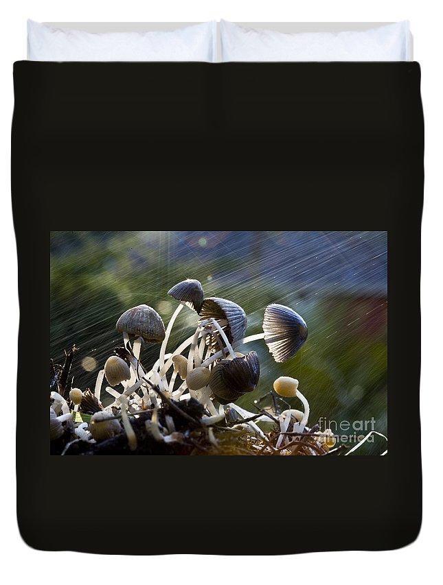 Mushrooms Rain Showers Umbrellas Nature Fungi Duvet Cover featuring the photograph Nature by Sheila Smart Fine Art Photography