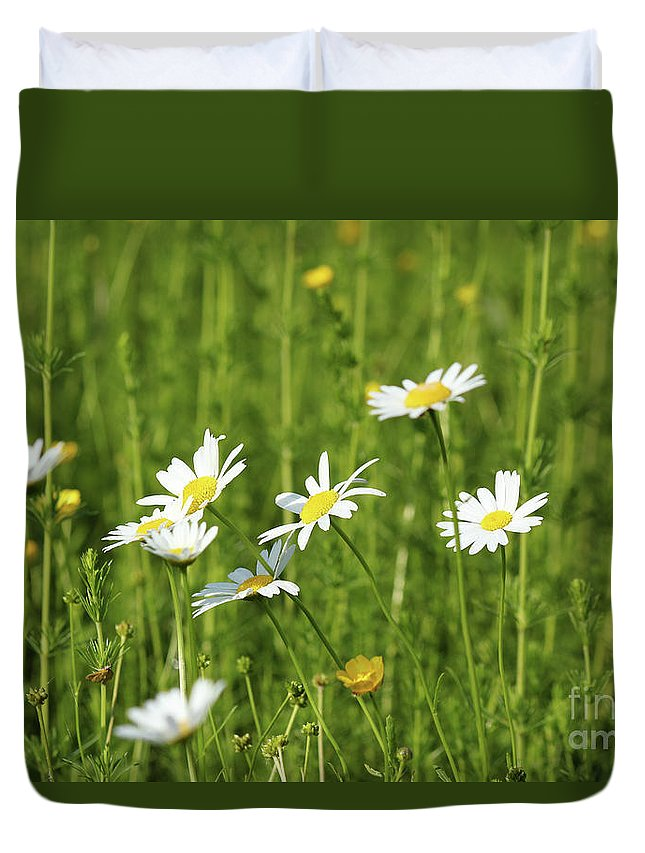 Camomile Duvet Cover featuring the photograph Nature Spring Scene White Wild Flowers by Goce Risteski