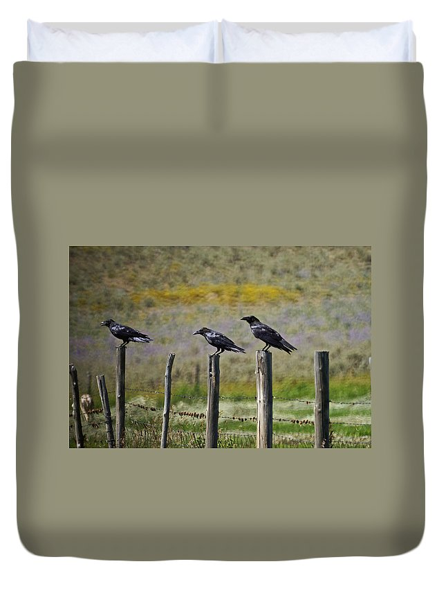 Crows Duvet Cover featuring the photograph Neighborhood Watch Crows by Heather Coen