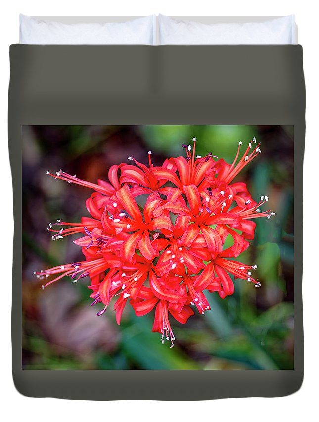 Flower Duvet Cover featuring the photograph Nerine Sarniensis - Guernsey Lily by Tony Crehan