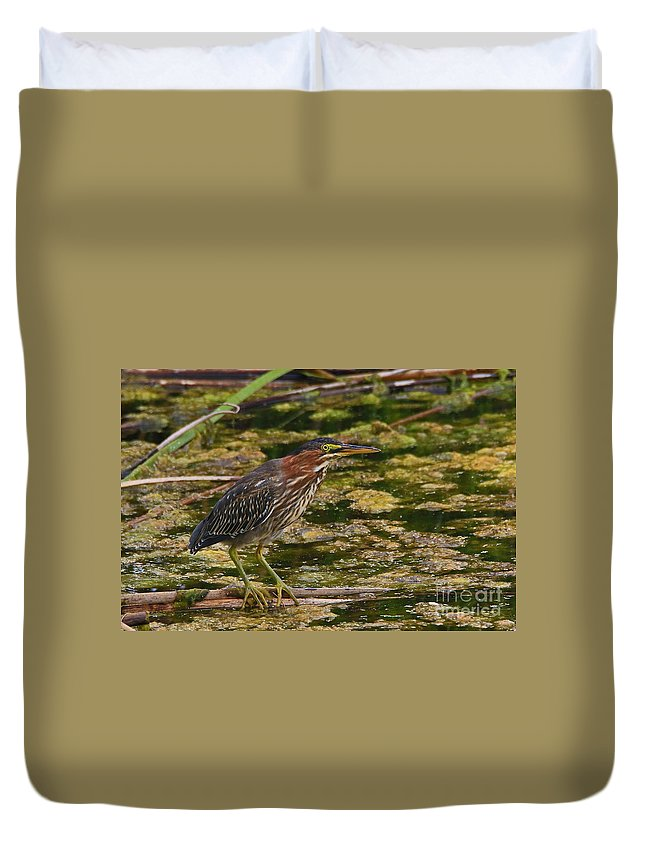 Green Duvet Cover featuring the photograph Nervous Green Heron by Craig Corwin