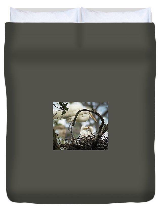 Nest Duvet Cover featuring the photograph Nesting Egret by Janal Koenig