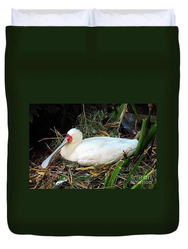 Photography Duvet Cover featuring the photograph Nesting Spoonbill by David Lee Thompson