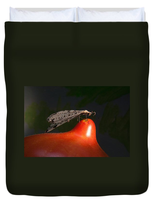 Neuropter Duvet Cover featuring the photograph Neuroptera Posing by Douglas Barnett