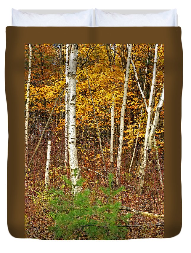 Fine Art Duvet Cover featuring the photograph New Growth Old Leaves by Phill Doherty