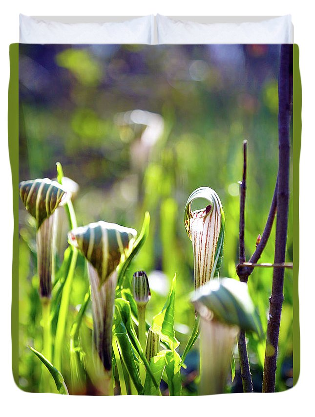 Plant Duvet Cover featuring the photograph New Life by Megan Swormstedt