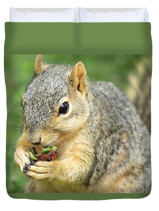 Sun Duvet Cover featuring the photograph Nibbling by Bonfire Photography