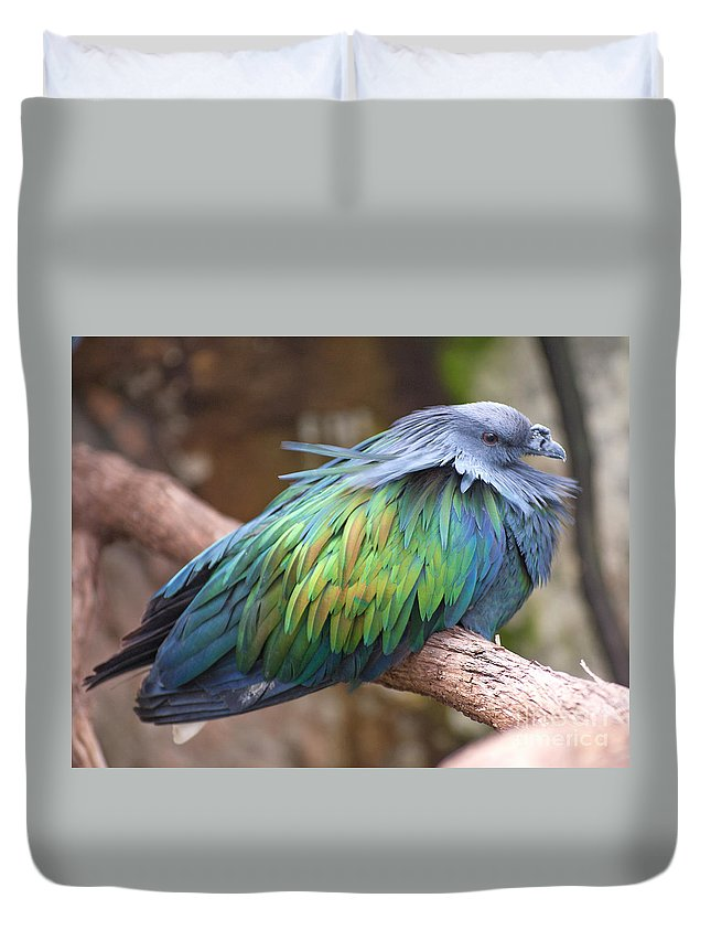 Nicobar Pigeon Duvet Cover featuring the photograph Nicobar Pigeon by Ken Killion