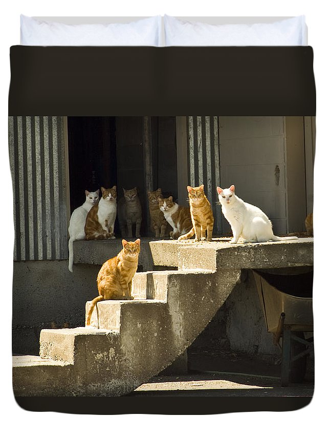 Cats Duvet Cover featuring the photograph Nine Lives by Louise Magno