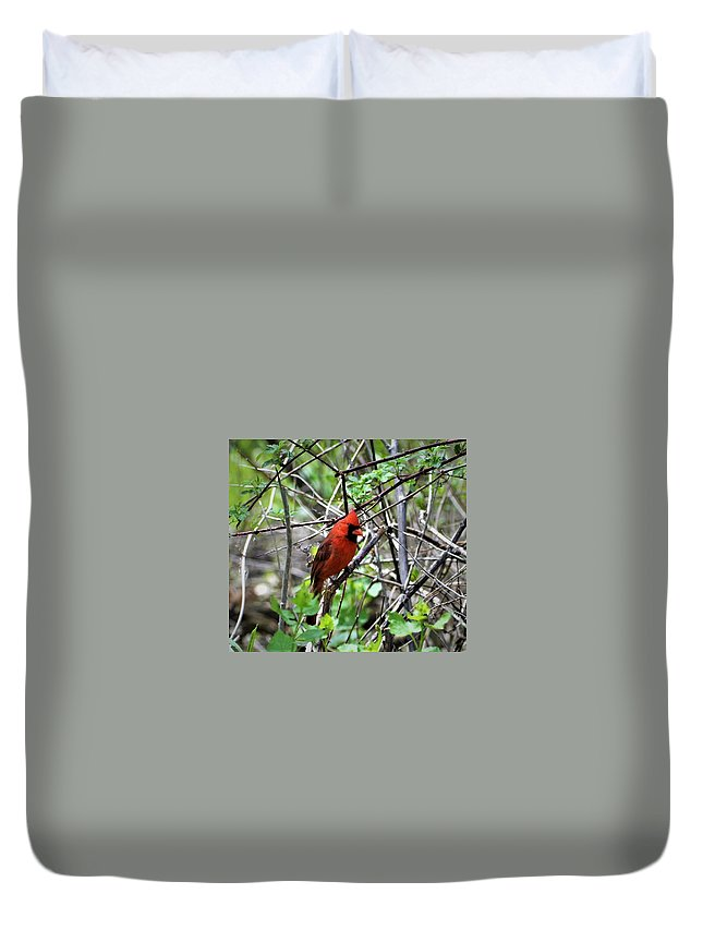 Birds Duvet Cover featuring the photograph Northern Cardinal by Dennis Symes