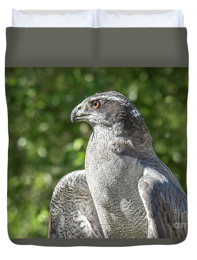 Northern Goshawk Duvet Cover featuring the photograph Northern Goshawk by Angie Rea