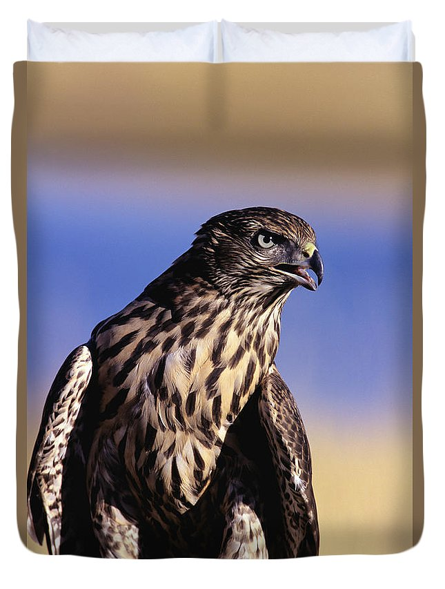 Accipiter Duvet Cover featuring the photograph Northern Goshawk by John Hyde - Printscapes