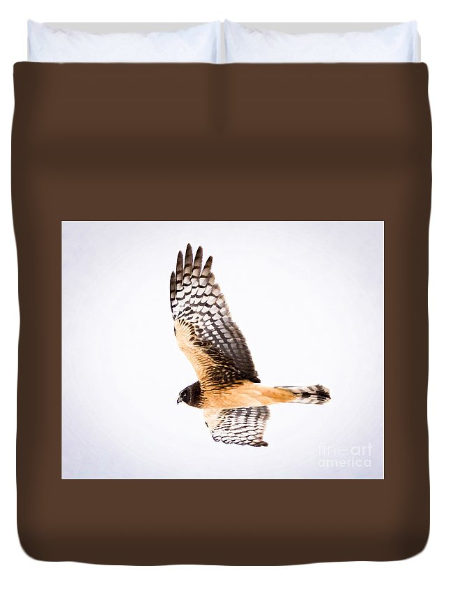 Canon Duvet Cover featuring the photograph Northern Harrier by Ricky L Jones