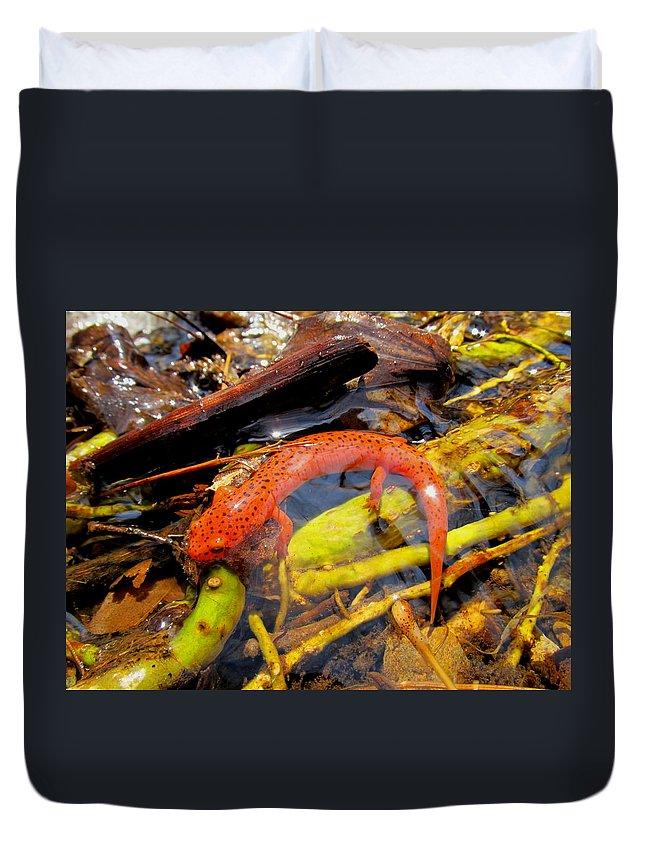 Northern Red Salamander Nature Prints Maryland Appalachian Amphibians Orange Salamander Streams Creek Brook Aquatic Life Water Quality Duvet Cover featuring the photograph Northern Red Brook by Joshua Bales