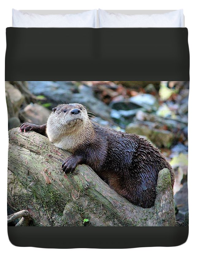 Northern River Otter Duvet Cover featuring the photograph Northern River Otter by Cynthia Guinn