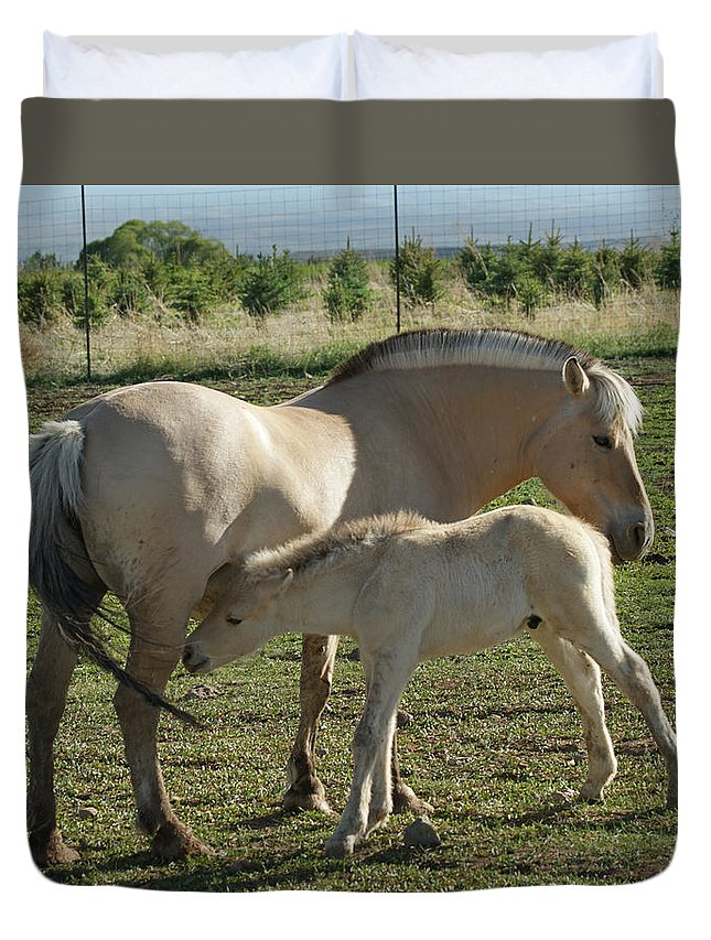 Norwegian Fjord Horse Duvet Cover featuring the photograph Norwegian Fjord Horse And Colt by Ernie Echols