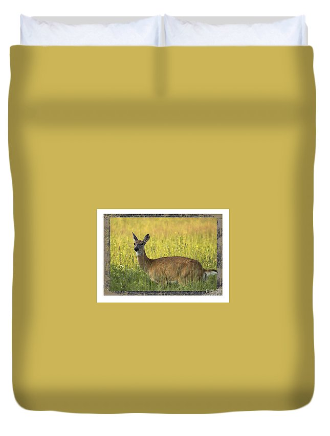 Deer Duvet Cover featuring the photograph Not Just Bears by Donna Crider
