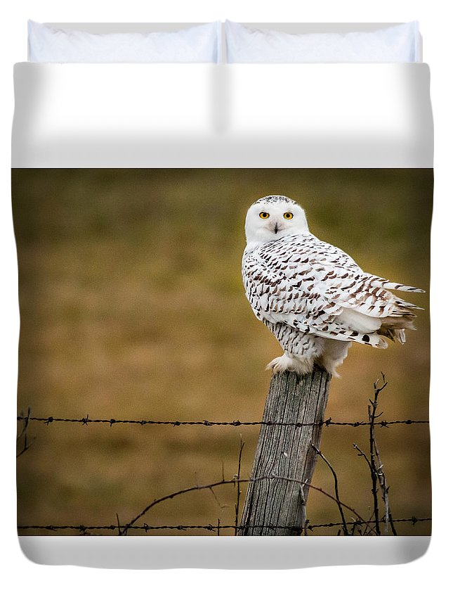 Snowy Owl Duvet Cover featuring the photograph Not Sharing This Post by Sandy Roe