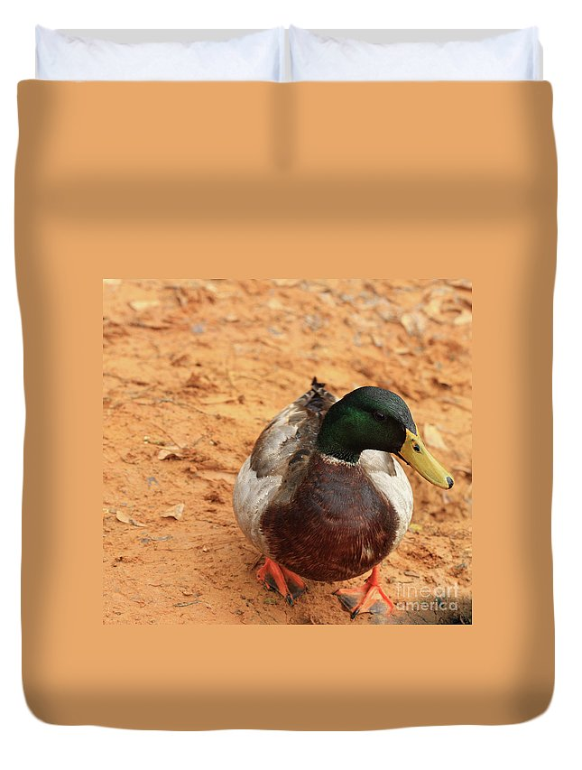 Mallard Photography Duvet Cover featuring the photograph Number 17 by Kim Henderson