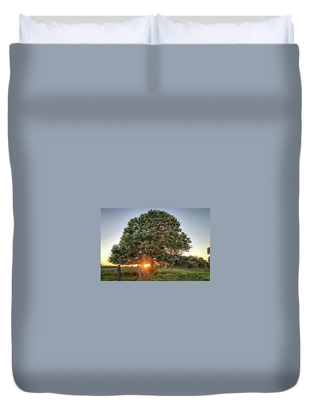 Sunset Duvet Cover featuring the photograph Oak At Sunset by Clyde Scent