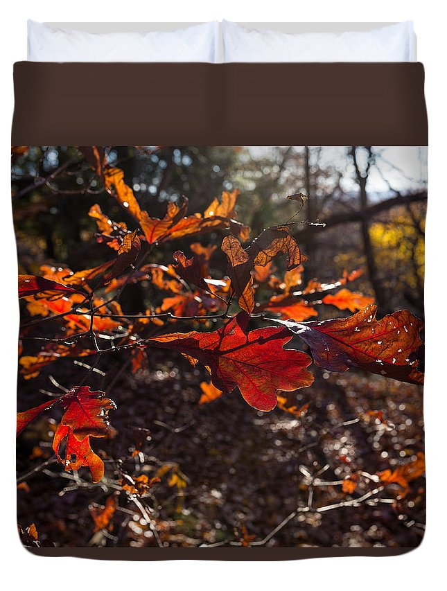Virginia Kendall Duvet Cover featuring the photograph Oak In Evening by Tim Fitzwater