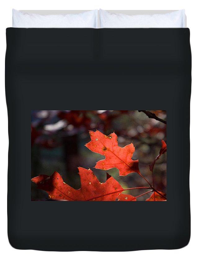 Oak Duvet Cover featuring the photograph Oak Leaves Aglow by Douglas Barnett