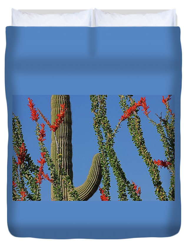 A Plant Indigenous To The Sonoran Desert And Chihuahuan Desert In The Southwestern United States (southern Nevada Duvet Cover featuring the photograph Ocotillo Majic by Reed Rahn