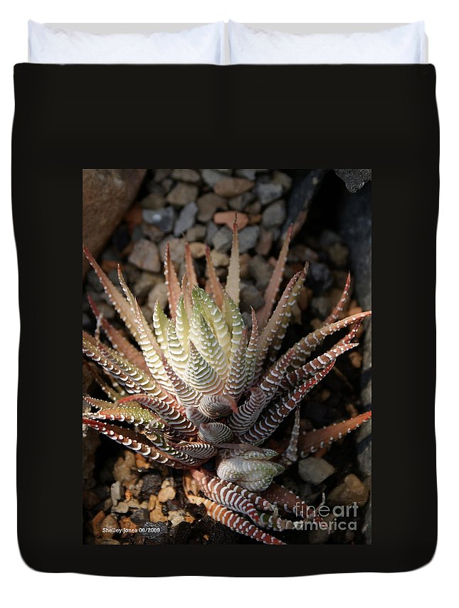 Cacti Duvet Cover featuring the photograph Octo Cacti by Shelley Jones