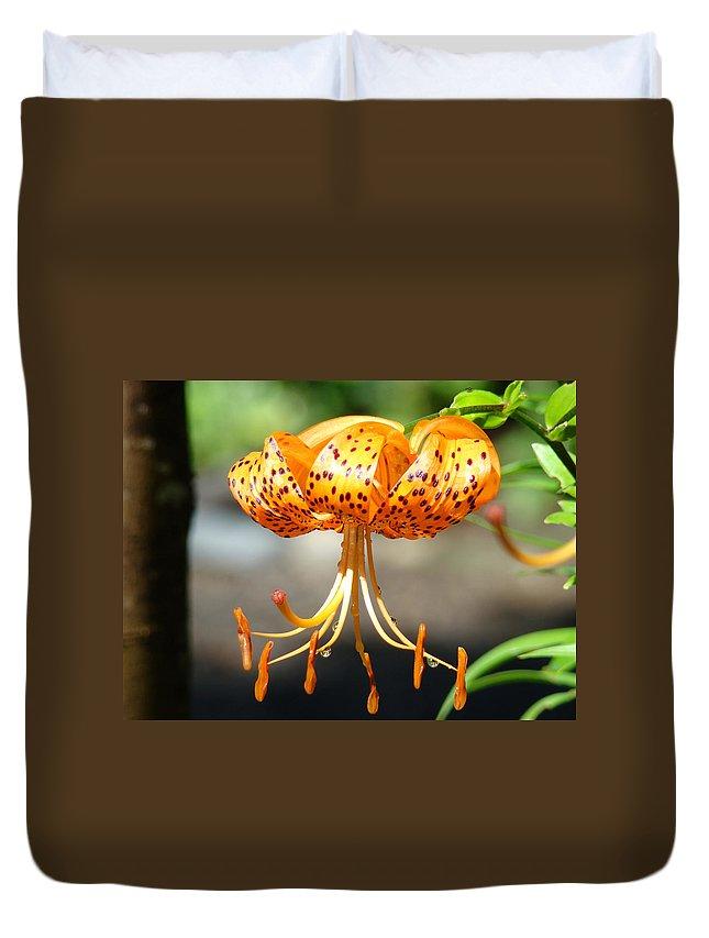 Lilies Duvet Cover featuring the photograph Office Art Master Garden Lily Flower Art Print Tiger Lily Baslee Troutman by Baslee Troutman