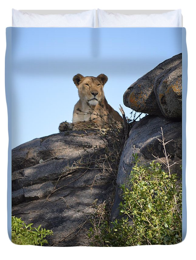 #wildlife #africa_lions #big_cats #bigcats #animals #lionesses Duvet Cover featuring the photograph Oh So Regal by Sally Jones