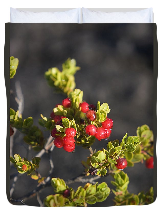 Berry Duvet Cover featuring the photograph Ohelo Berries by Ron Dahlquist - Printscapes